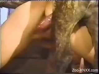 Socks-wearing chick enjoys hardcore anal with a dog