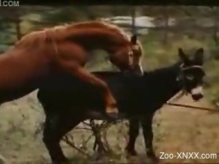 Two horses fucking, recorded in high quality