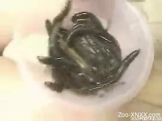 Japanese chick gets infested with some insects or something