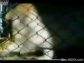 Caged animal fucking session with a juicy beauty